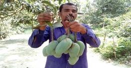 নওগাঁর বাজারে সুস্বাদু নাক ফজলী
