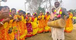 ক্ষুদ্র নৃ-গোষ্ঠীর সাঁওতাল সম্প্রদায়ের ঐতিহাসিক সহরাই উৎসব পালিত
