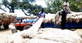 আত্রাইয়ের উৎপাদিত পাট রপ্তানি হচ্ছে দেশের বিভিন্ন জেলায়