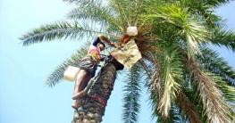 আত্রাইয়ে শীতের আগমনী বার্তায় চলছে খেজুর রস সংগ্রহের প্রস্তুতি