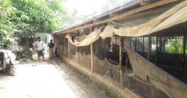 স্কুল সংলগ্ন মুরগির খামারের দুর্গন্ধে হুমকির মুখে শিক্ষা ব্যবস্থা