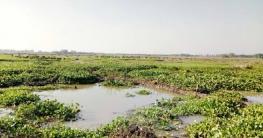 আত্রাইয়ে কচুরিপানায় থমকে গেছে কৃষকের স্বপ্ন