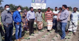 মান্দায় কৃষিতে কার্বন সমৃদ্ধ জৈব সার আশার আলো দেখছেন কৃষক