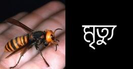 আত্রাইয়ে ভিমরুলের কামড়ে শিশুর মৃত্যু