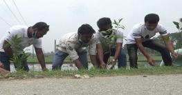 মুজিববর্ষ উপলক্ষে নওগাঁয় থানা ছাত্রলীগের বৃক্ষরোপন