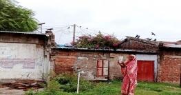 কাকের প্রতি 'বিরল ভালবাসা' আত্রাইয়ের সায়মা বিবি'র