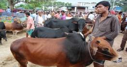 মহাদেবপুরে পশুর হাটে দালালদের দৌরাত্ম্য:বিপাকে ক্রেতা-বিক্রেতারা