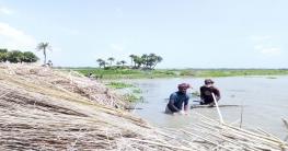 আত্রাইয়ে পাট কাটা-ধোয়ায় ব্যস্ত কৃষাণ কৃষাণী