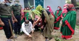 পোরশায় আনসার-ভিডিপি'র বৃক্ষ রোপন